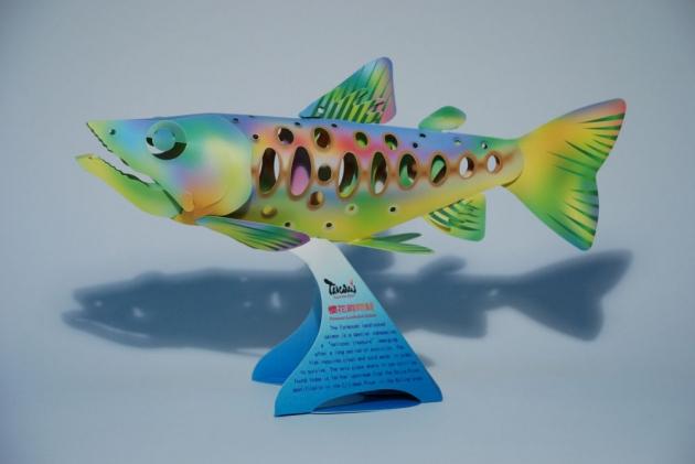 櫻花鉤吻鮭 1
