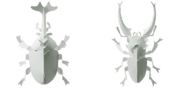 獨角仙+鍬形蟲 1